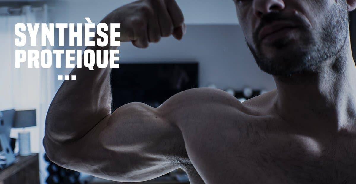 La synthèse protéique en musculation